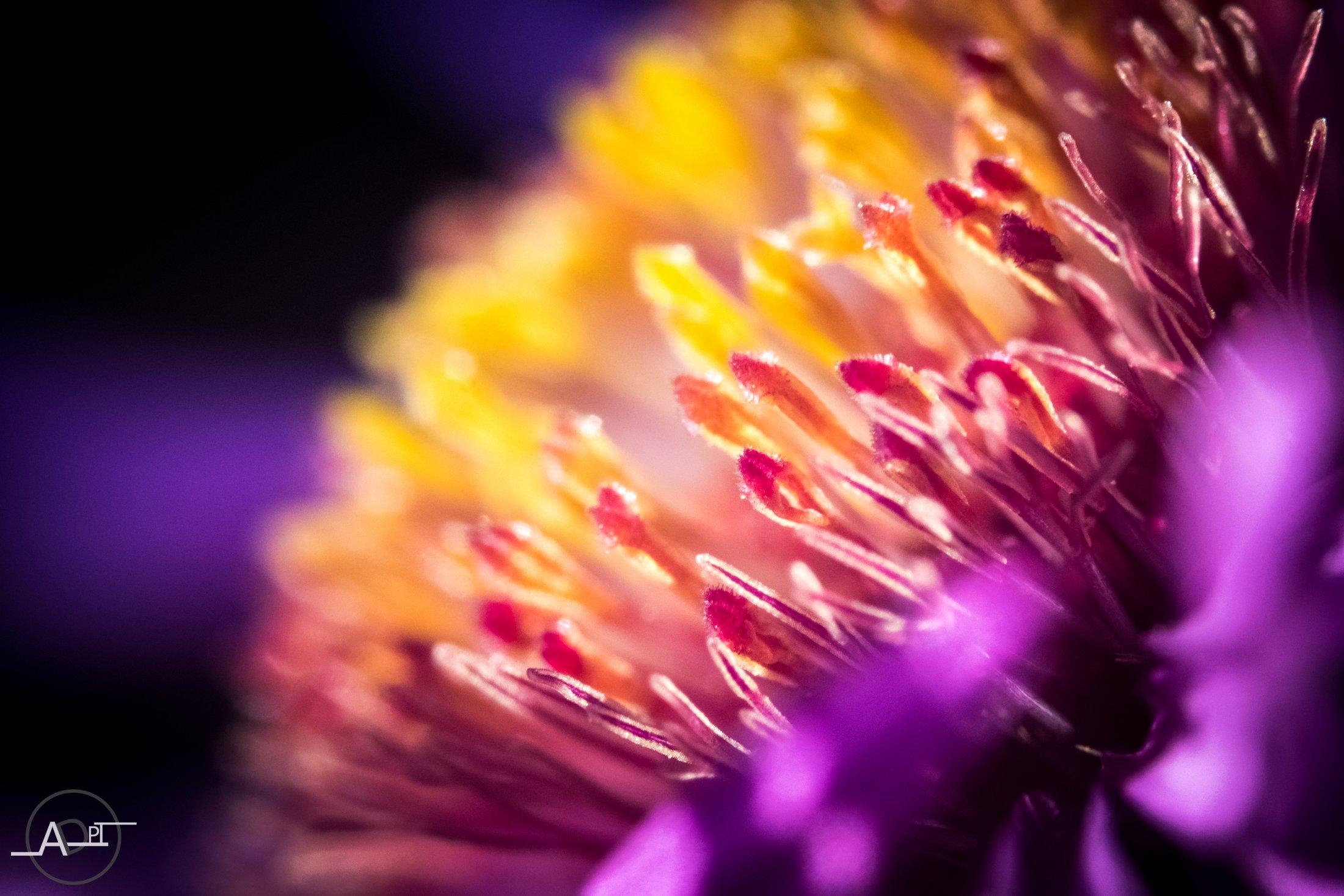Pistil De Fleur-2